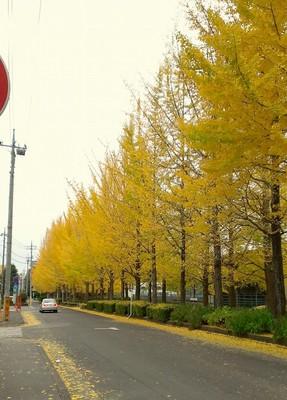 2012-11-19 13.00.59.jpg