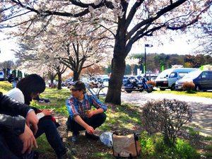 39 桜.jpg