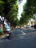 中杉通り.jpg