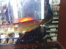 長い魚….jpg